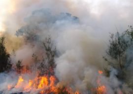 Bushfire Effects on MGP Pine Products